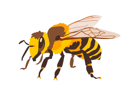 Animal_insect_honeybee_no line