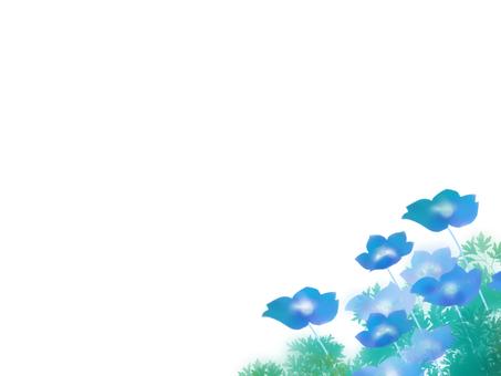유리 당초 (루리카라쿠사), 네모 피라