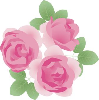 Cut_Rose 5
