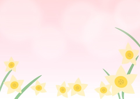Narcissus pink background
