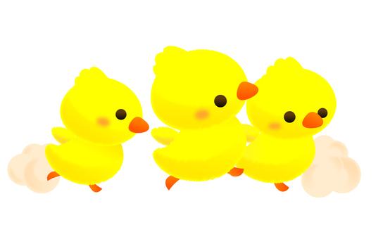 Chick's Kindergarten