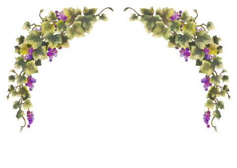 Grape illustration frame 12-2 (no line)