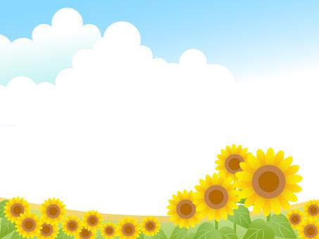 Sunflower, landscape 1