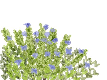Rosemary 4