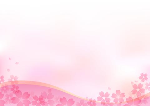 Cherry blossoms 47