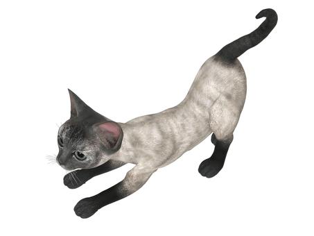 子猫(シャム)
