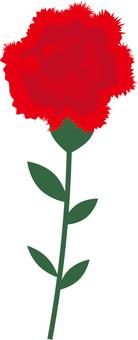 Carnation illustration icon