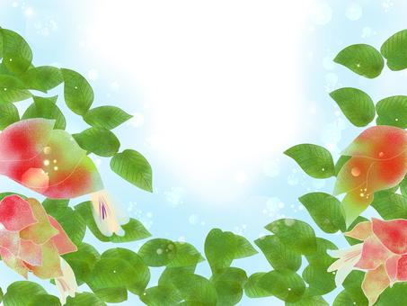 小蝦草(cobissau)