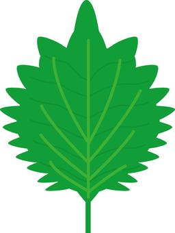 Food Series Vegetable Perilla leaves