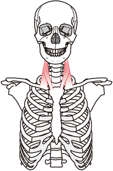 Thoracic nipple