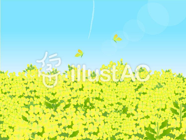 菜の花畑イラスト No 704584無料イラストならイラストac