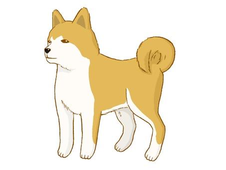 Akita dog 02