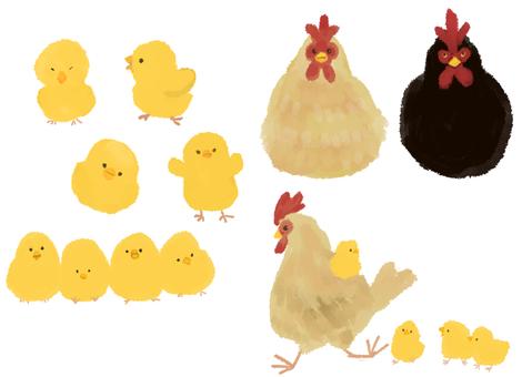 병아리 · 닭