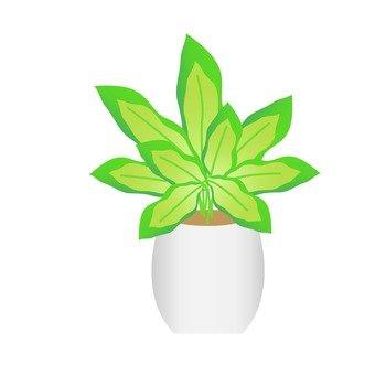 Houseplant - Defenavia