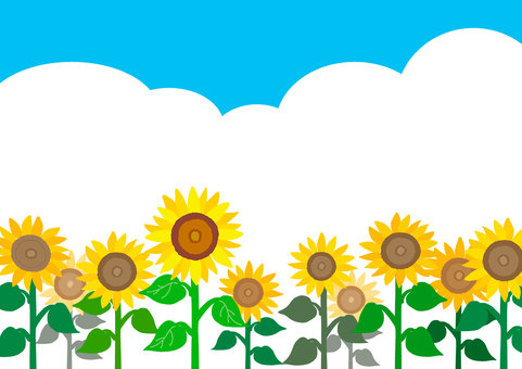 [Summer] Sunflower field background illustration