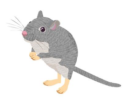 십 후타 쥐