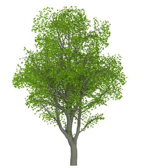 Trees _0002_01