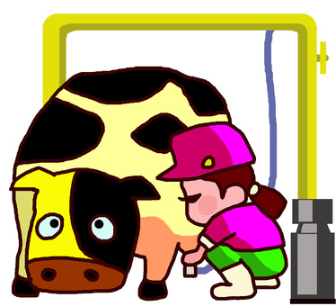Milking of a dairy cow