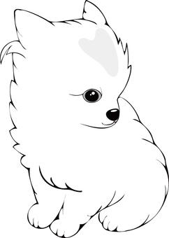 Pomeranian (white) puppy