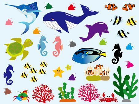 바다 생물들의 경계선 선 없음
