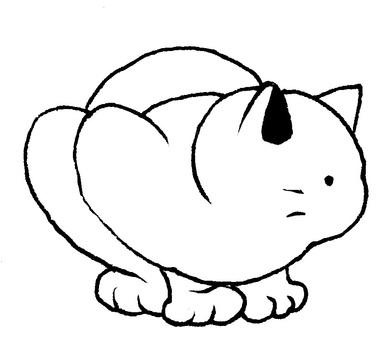 Shirozaneko Black and white
