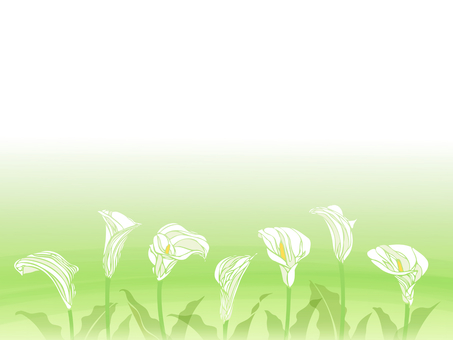 Background with white color flower