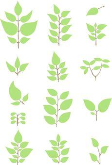 Leaf material 1