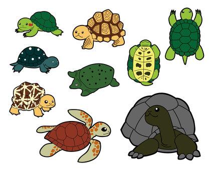 Turtle 9 species