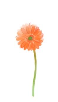 거베라 꽃 수채화