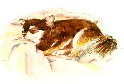 Chihuahua taking a nap