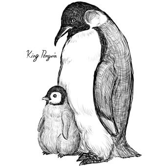 King Penguin 親子