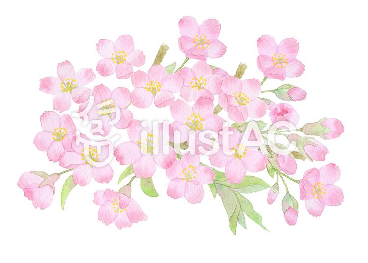 桜2016vr ★0373-Fのイラスト