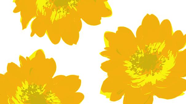 Anemone wallpaper yellow