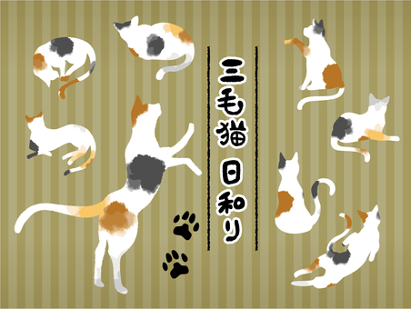 Calico pose illustration set