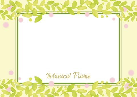 植物的框架6