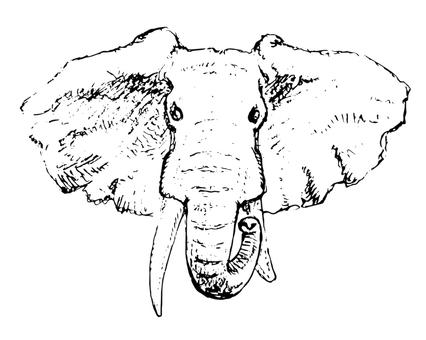 動物_大象