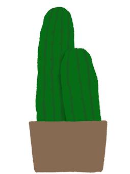 Pillar cactus potted plant