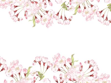 꽃 테두리 421 벚꽃, 벚꽃의 계절의 꽃 프레임