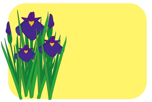 Flower - iris (shoumu) -16