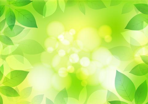 Fresh green material 155