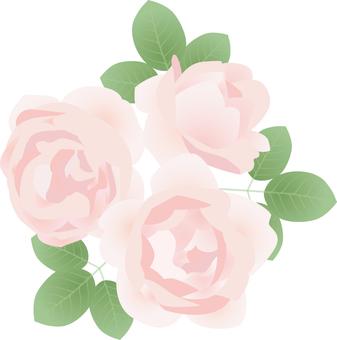 Cut_Rose 4