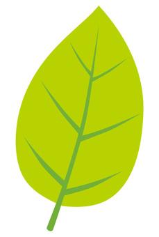 Leaf 1 Bright yellowish green