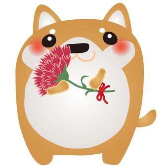 Shiba Inu Carnation