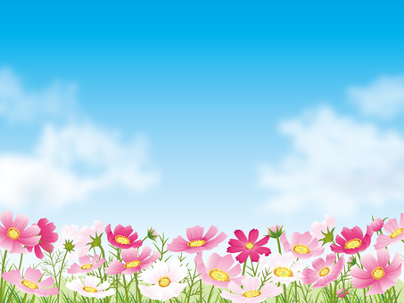 Blue sky background with cosmos field and cloud 02