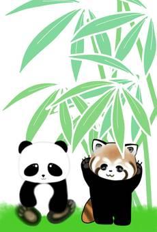 Panda Lesser panda