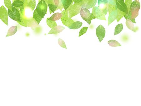 新緑 06