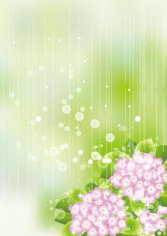 雨の中の紫陽花71