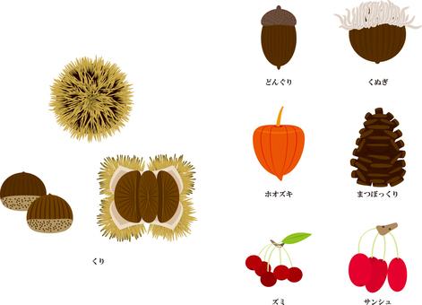 Seven species of autumn tree