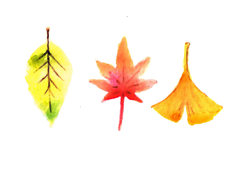 【Watercolor picture】 Autumn leaves