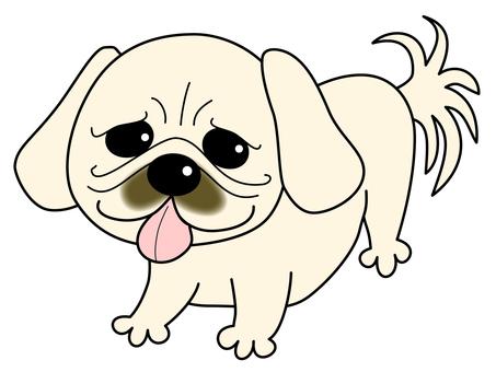 Pekingese ~ world dog